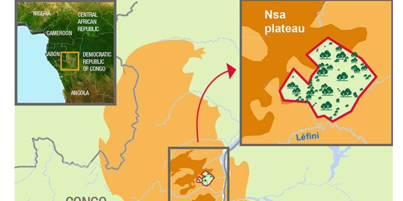 Marco Arezio - Consulente materie plastiche - Forestry in Congo to reduce Total's carbon footprint