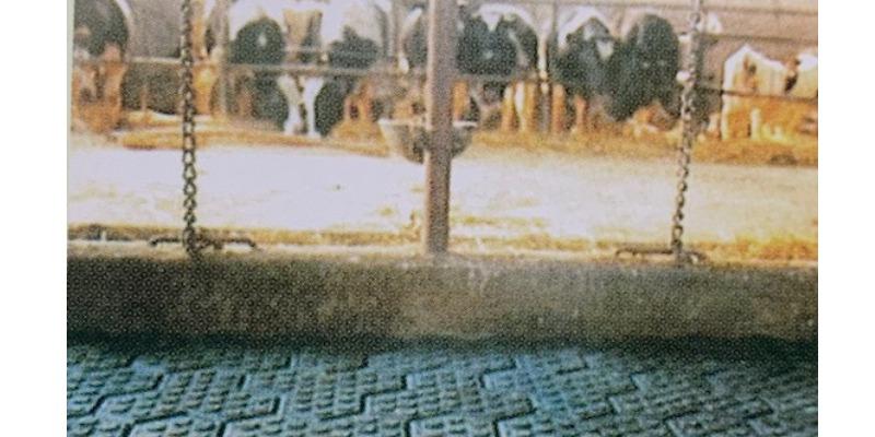 Marco Arezio - Consulente materie plastiche - Pavimentazioni per l'agricoltura